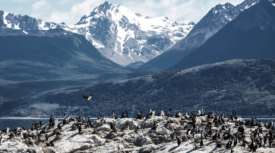 Auf einer Südamerika Kreuzfahrt kommen sie auch an der Pinguininsel Yécapasela vorbei